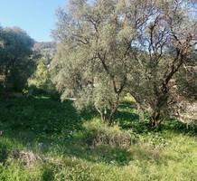 Редкий земельный участок на Roquebrune-Cap-Martin, продажа. №39996. ЭстейтСервис.