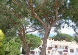 Пентхаус с большой террасой и морским видом