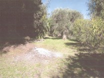 Ровный участок под строительство в Ницце