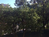 Студия возле Краеведческого музея и Parc de l'Indochine